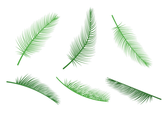 tropical leaves tropical summer resort relax paradise Palm leaves palm leaf isolated Palm leaf palm nature natural leaves leaf jungle leaves jungle leaf jungle isolated green