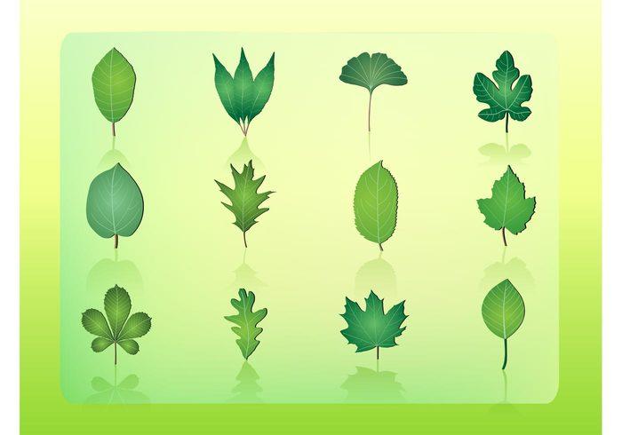 vibrant tree plants oak life leaves leaf Hazel green foliage emblem ecology close-up chestnut branch botany