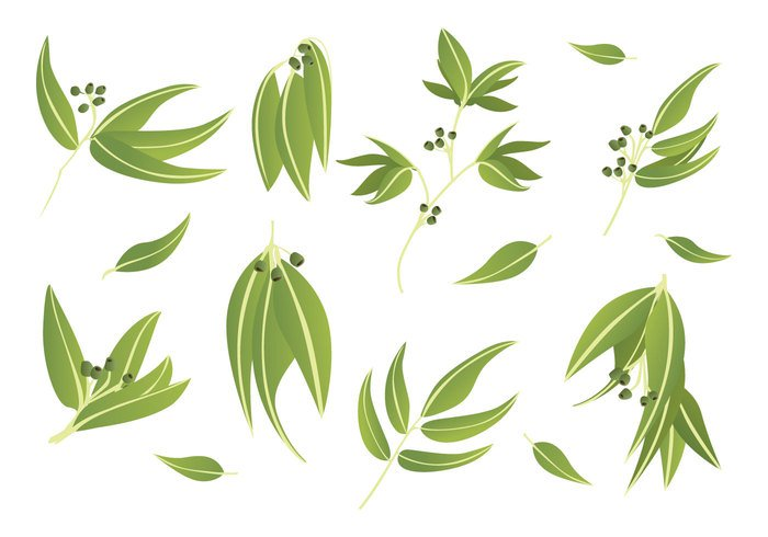 White Background white variety tree nuts montage leaf Isolated On White gum nuts gum leaves gum green flowers eucalyptus leaves eucalyptus eucalypt collage Assortment