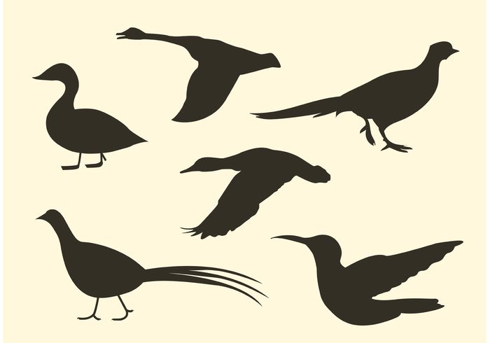 wings wildlife wild silhouette nature isolated flying flock of birds vector flight feather birds bird silhouette bird of paradise bird animal silhouette animal