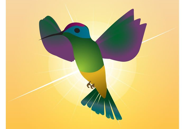 paradise nature hummingbird fly flight feathers fauna fantasy exotic colorful Colibri beak animal