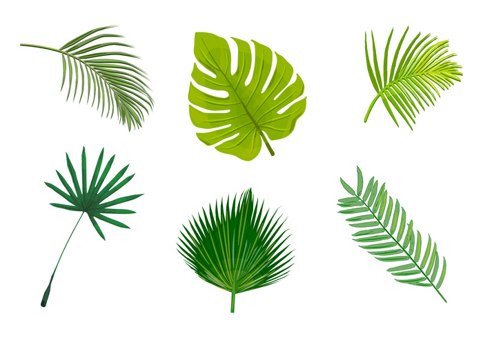 types realistic Palm leaves palm leaf isolated Palm leaf palm frond nature leaves leaf jungle leaves jungle green frond exotic botany