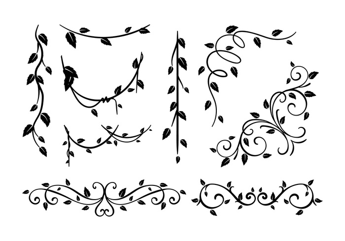 white vector plant ornamental ornament natural lush liana leaf ivy illustration hanging growing greenery green grayscale grapes garden foliage flowerpot droop decoration bw blank black balcony background