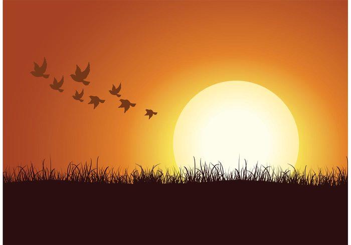 yellow vector sunshine sunset sunrise sunny sunlight sun sky silhouette peaceful peace orange nature light illustration Heaven free fly flock of birds vector flock flight concept bird beautiful background animal