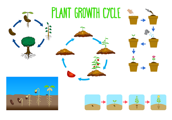 stem seedling seed process plantation plant growth cycle plant nature life leaf growth grow green garden cycle botany agriculture