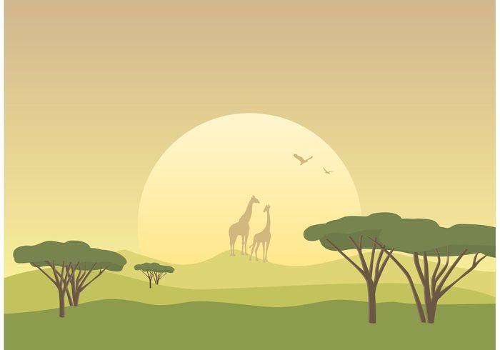 wildlife wild vector tree travel tourism tasmania Tanzania sunset sunrise sunlight sun summer skyline sky silhouette scenics Savannah safari plant nature national park mammal landscape kenya illustration horizon green grass giraffe dusk dawn branch background animals amboseli national park african africa acacia tree acacia
