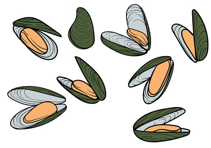 zealand white up tropical traditional symbol stencil steamed silhouette shell shape seafood sea raw protein picture pictogram perna pattern organic open on ocean object Nutritious new mussels mussel meal marine lunch isolated Ingredient image icon Healthy green graphic gourmet fresh food drawing draw dish dinner Diet design Delicacy Culinary Cuisine creative cooking cooked contour concept close Clams cartoon canaliculus calcium boiled black badge background artistic Aquatic appetizer animal Alone