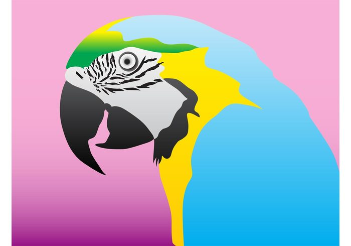 Plumage pet Parrot vector nature Macaw feathers eyes exotic Domesticated animal colors bird beak animal