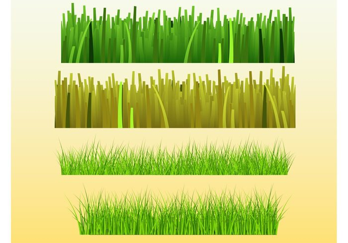 plants park nature green Grass vectors Grass graphics garden frame ecology brush botany Backgrounds agriculture