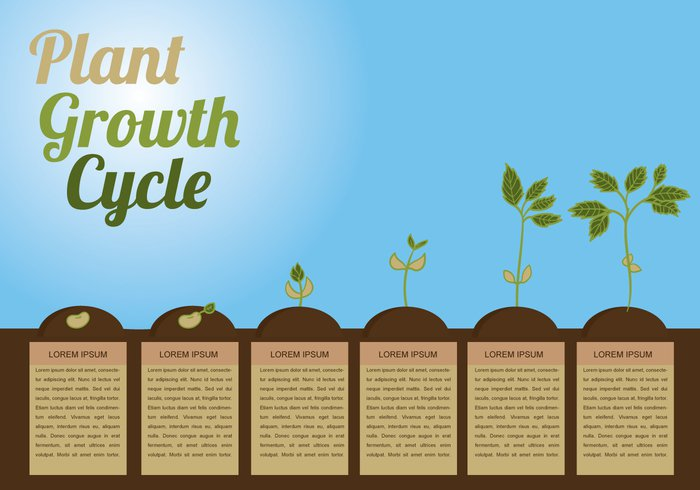 vegetable vector tree seedling seed progress produce potting plant growth cycle plant phases nature life land infographic illustration growth green gardening garden cycle circle can bud brown background apple
