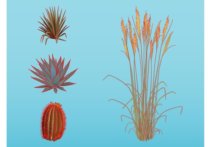 wheat Stems Plant vectors organic nature natural leaves grass gardener flora cactus botany blooming Aloe vera agave