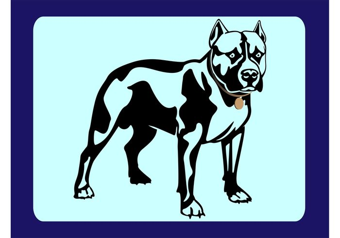 Threat strength Pointy Pitbull pet fighting eyes ears Domesticated dog collar breed attack animal