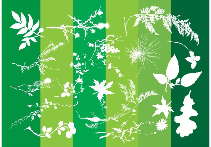 tree summer spring silhouette plant nature meadow leaf garden forest foliage flower floral field exotic decoration bush branch botany