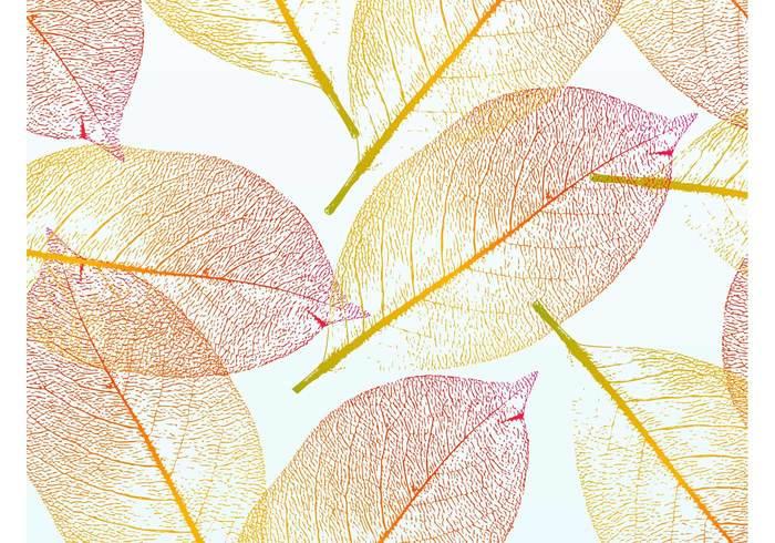 Warm tones veins tree transparent plant nature minimal leaf greeting card gradient Fall colorful