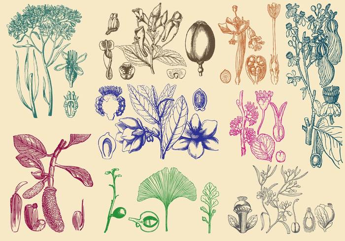 vintage vegetation texture sketch silhouette sign romantic retro plant organic old nature natural medicine medical leaf isolated image homeopathy herbal healthcare health green graphic ginko ginkgo Gingko foliage floral engraving engraved drawing draw doodle design decorative creative closeup botany beauty beautiful background art Alternative abstract