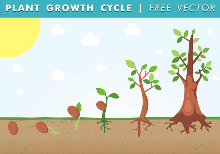 trunk Tree trunk tree sun stem seeds seedling seed roots process plants plant life cycle plant life plant growth cycle plant method little clouds life cycle life leaf grow ground Green Leaf green grass free plant growth cycle vector form of life cycle clouds birth