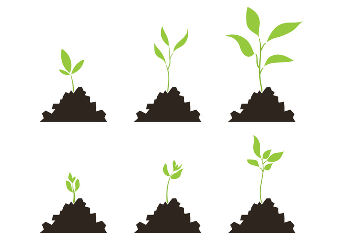 stages sprout soil seed scale roots progress plant growth scale plant growth cycle plant outside nature life leaf growth growing grow ground green environment developement cycle cultivation