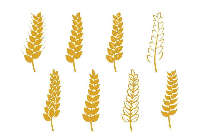 whole white wheatgrass wheat stalk wheat ears wheat vector symbol summer stalk spring simple shield seed seal Rye rural plant pattern organic nature natural logo isolated illustration icon Healthy harvest grow graphic grain golden fresh food field farm element Ear design decoration decor crop crest cereal bread branding barley bakery background agriculture abstract