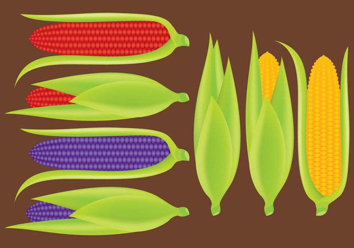yellow white vegetarian vegetable sweetcorn Ripe reflect raw peel organic nutrition maize isolated Healthy harvest green grain fresh food ear of corn Ear corn background