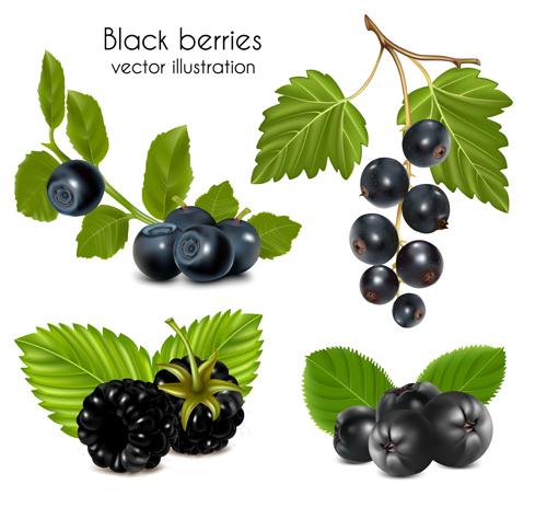 illustration berries