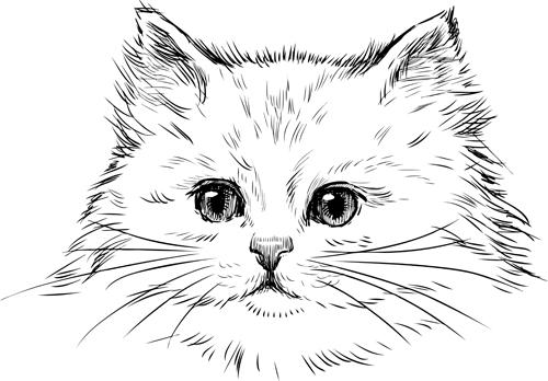 Hand drawn cats head vector set 02 - WeLoveSoLo