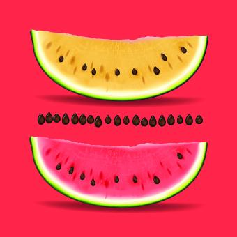 watermelon realistic elements element