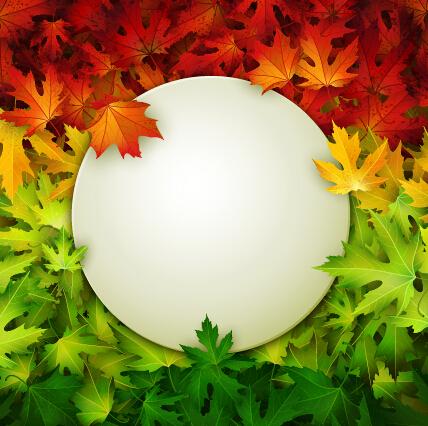 beautiful background autumn leaves autumn