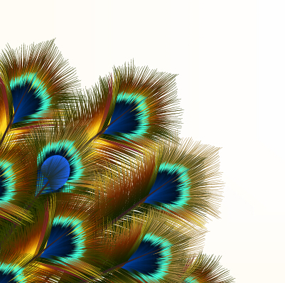 Beautiful peacock feathers background graphics 01 welovesolo - Beautiful peacock feather ...