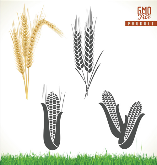 wheat corn