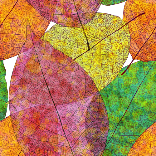 seamless pattern beautiful autumn leaves autumn