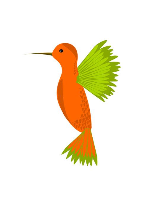hummingbird cute