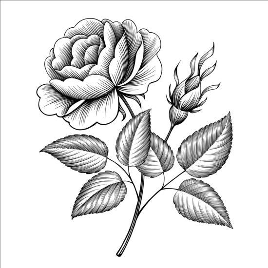 vintage rose engraving