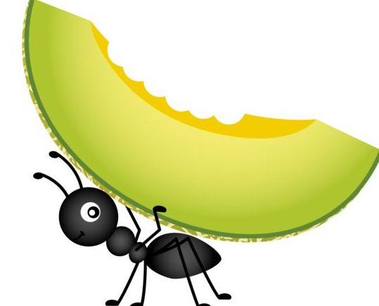 melon carrying cantaloupe ant