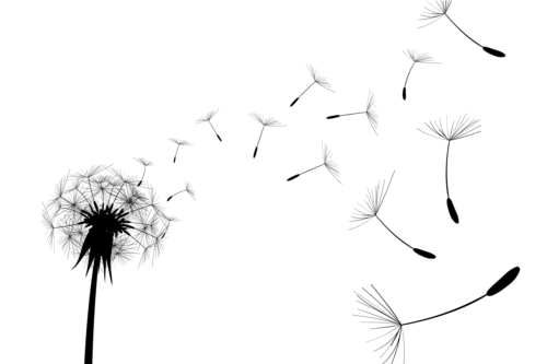 illustration dandelion black