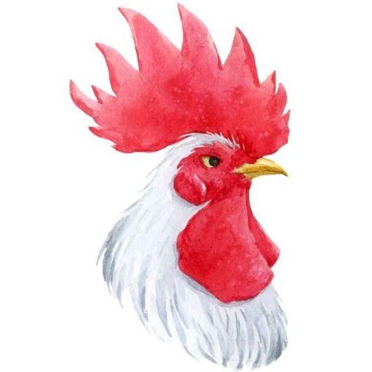 22q21tgmlt50q55 White rooster head vector